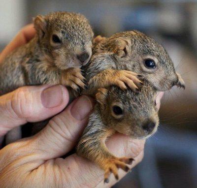Ardillas bebes