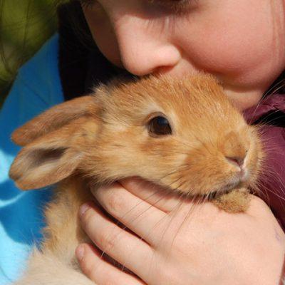 El conejo es la mascota ideal para niños