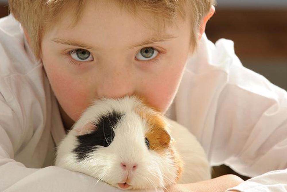 Cobaya mascota ideal para niños