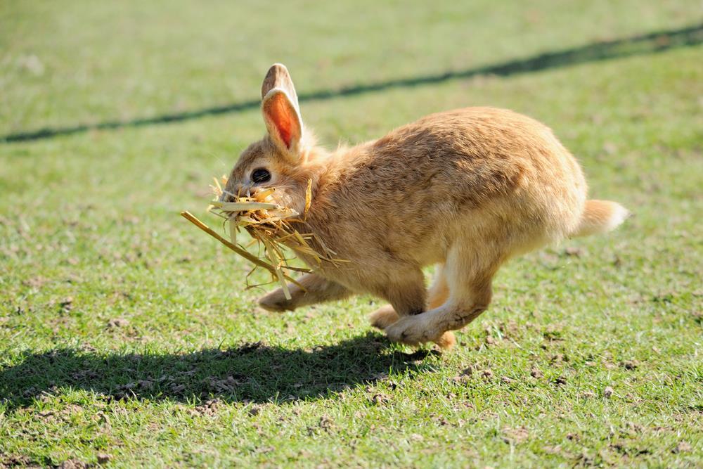 Divertido conejo saltando