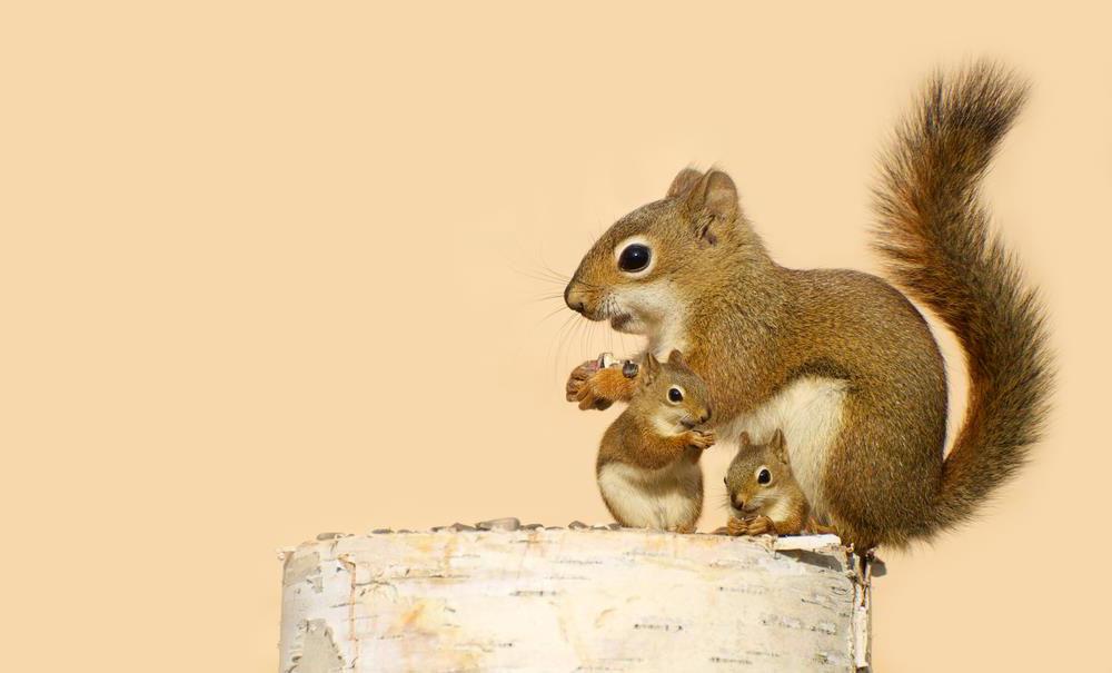 Mamá ardilla con sus bebes