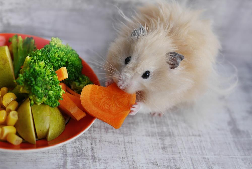 La alimentación del Hámster