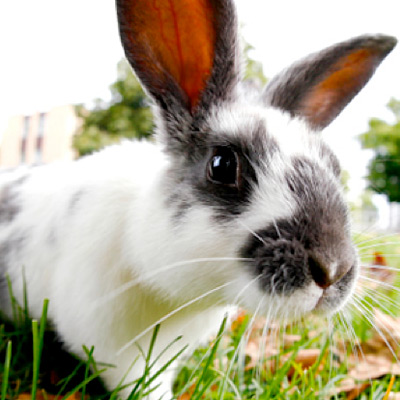 ¿Qué es un conejo?
