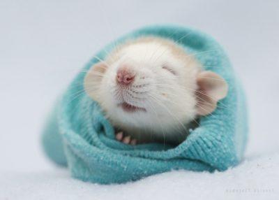Tiernos y adorables roedores