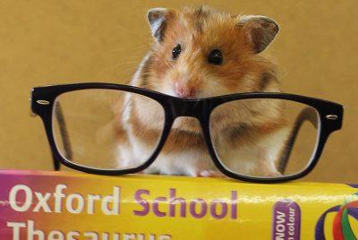 Curiosidades sobre los roedores