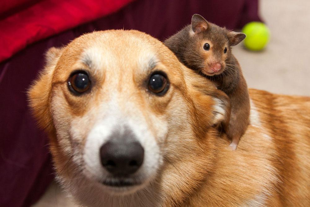 Consejos para tener perros o gatos con roedores